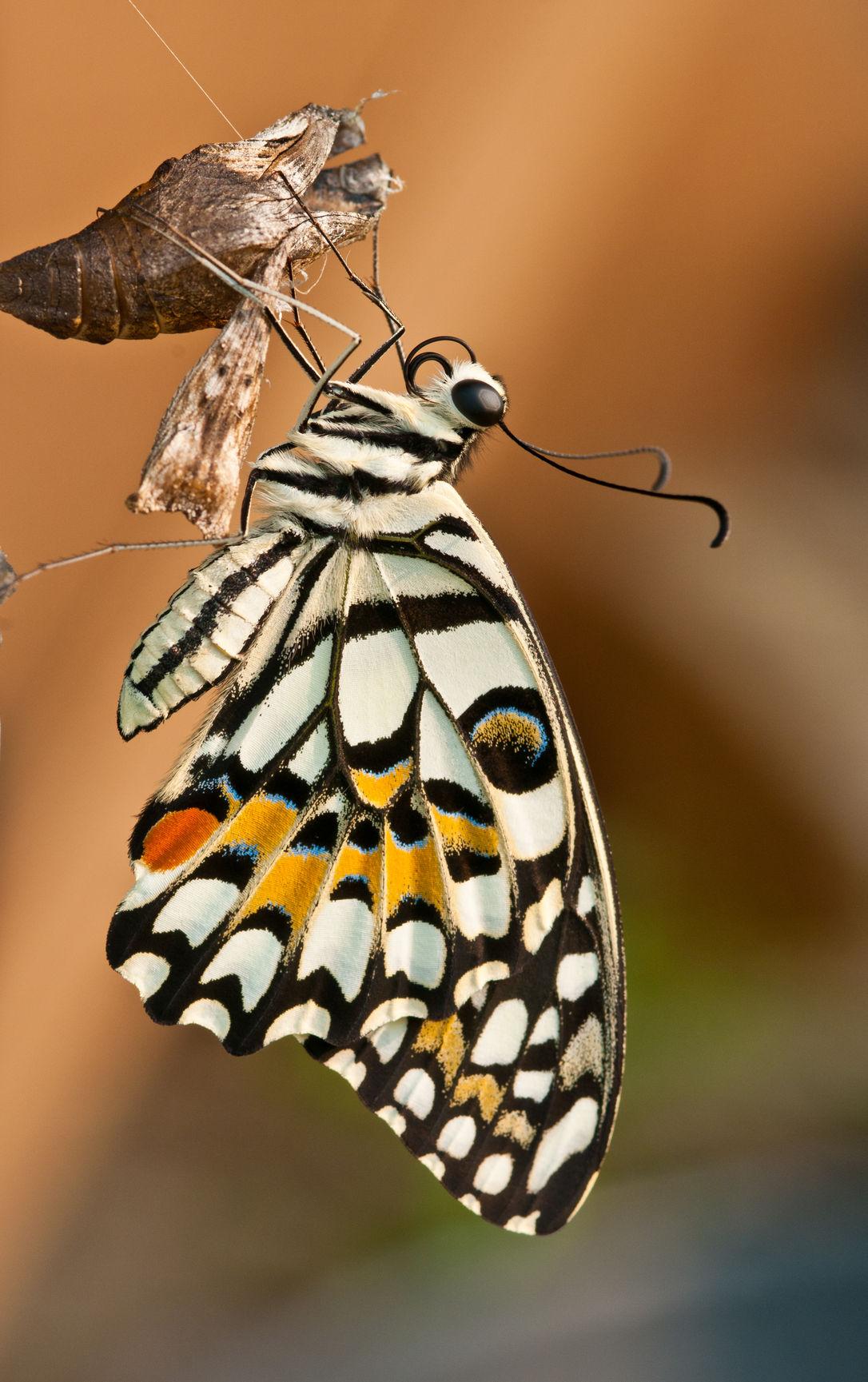 I, Caterpillar